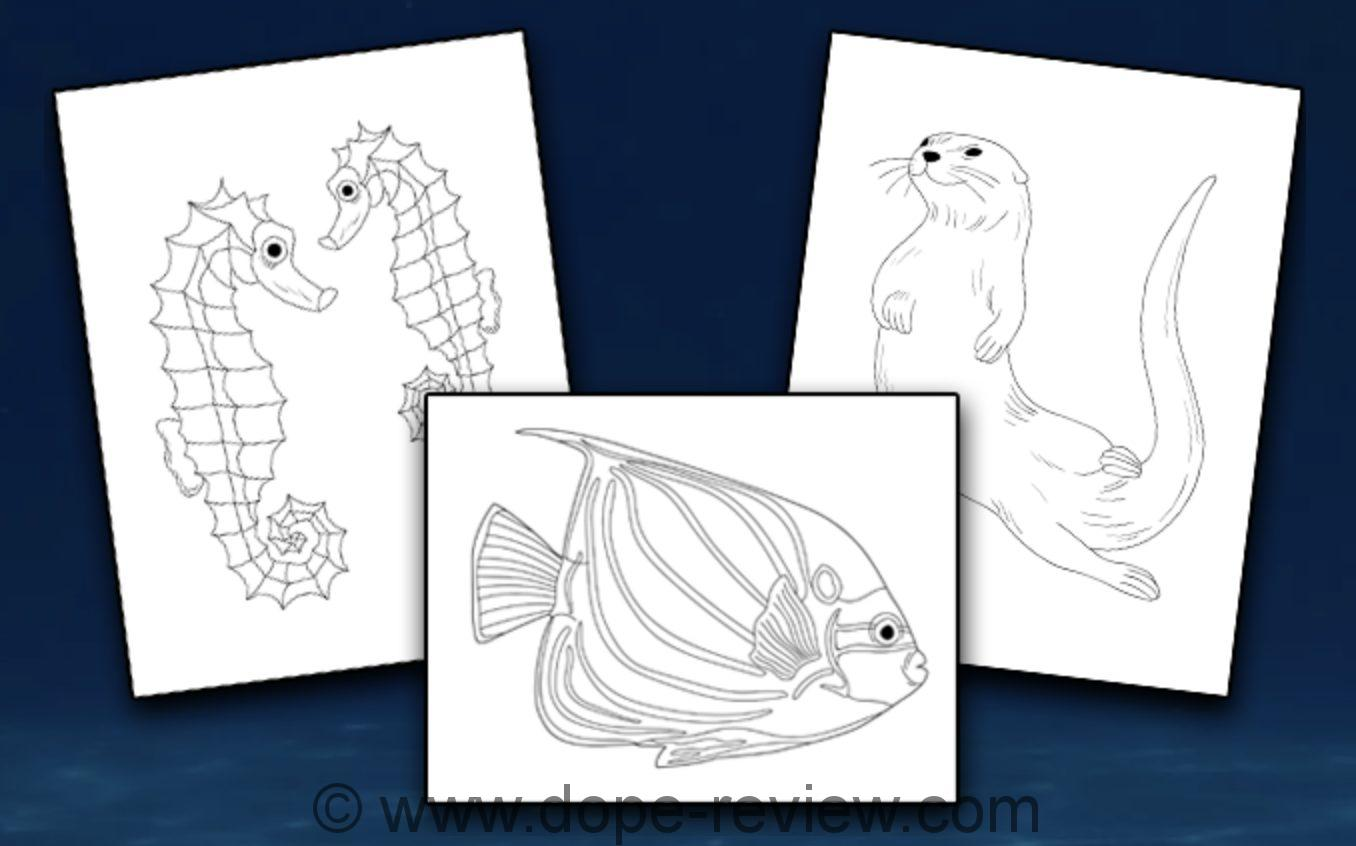 Aquatic Animals Coloring Pack Review